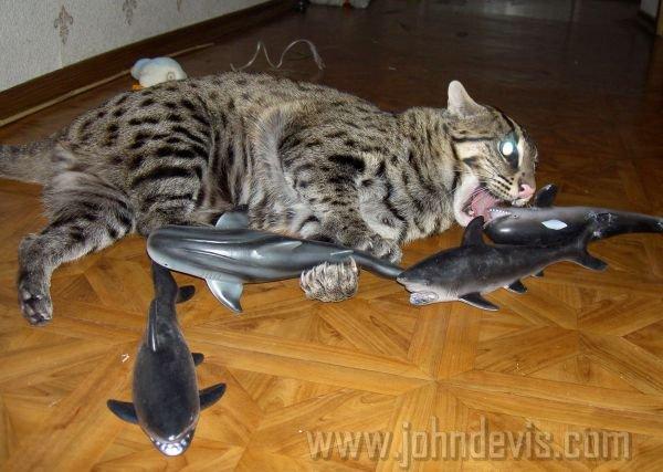 кот рыболов фото и цена