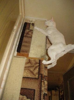 Когтеточка для кошек на угол